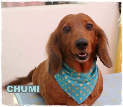chumi1.jpg