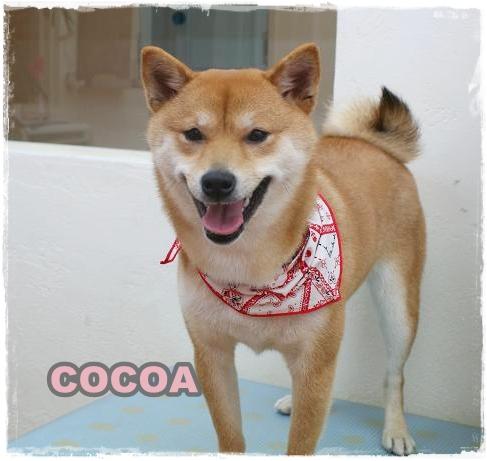 coco5.jpg