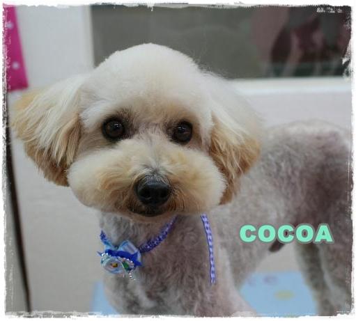 cocoa_20101227113506.jpg