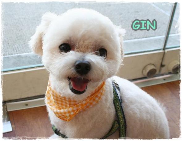 gin5.jpg