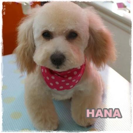 hana1_20110322090829.jpg