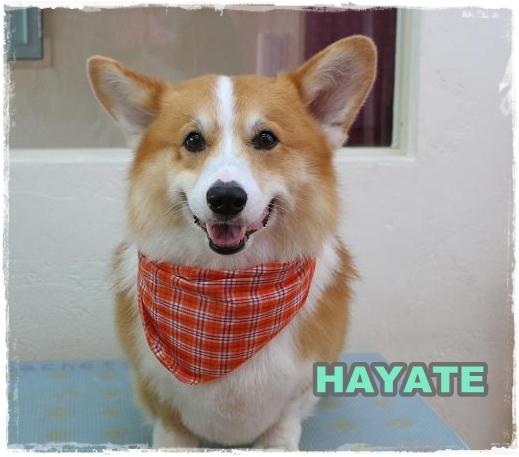 hayate4.jpg