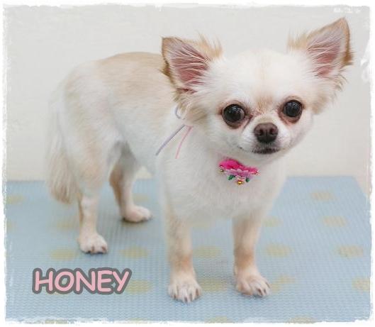 honey8.jpg