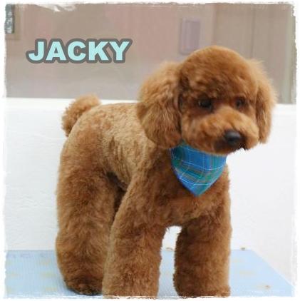 jacky2.jpg