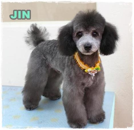 jin81.jpg