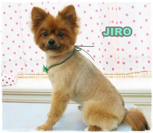 jiro5.jpg
