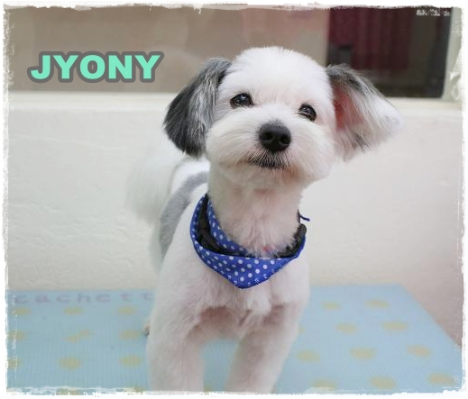 jyony4.jpg
