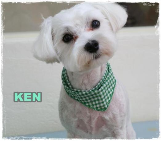 ken7.jpg