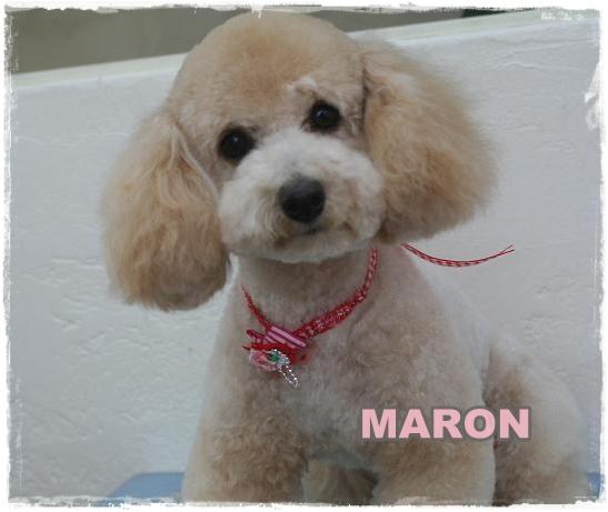 maron1_20110125091201.jpg