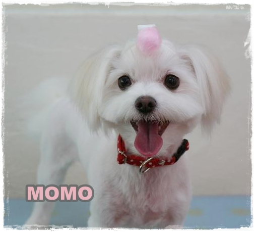 momo6.jpg