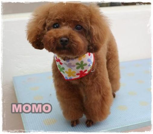 momo9.jpg
