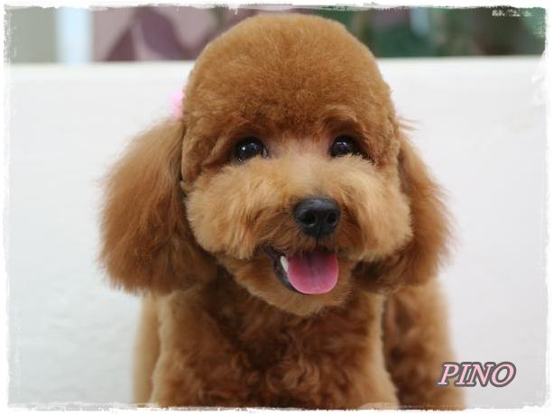pino_20101125155246.jpg