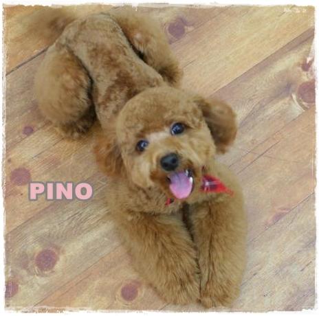 pino_20101227113559.jpg