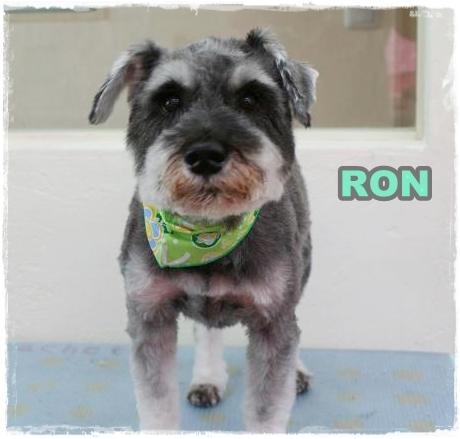 ron2.jpg