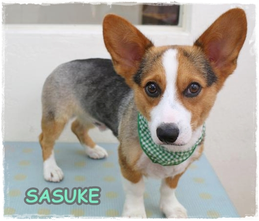 sasuke3_20110829153054.jpg