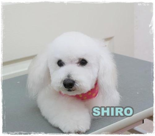 shiro8.jpg