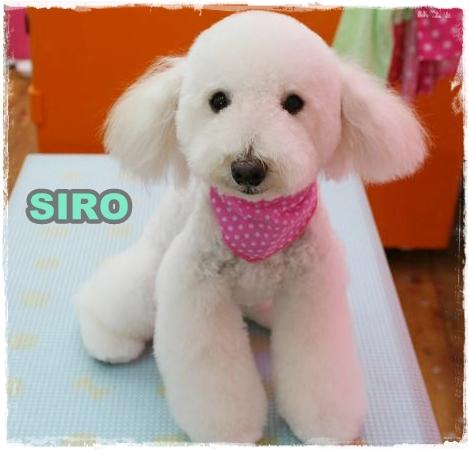 siro1.jpg