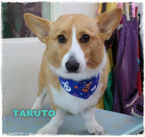 taruto_20110125091241.jpg