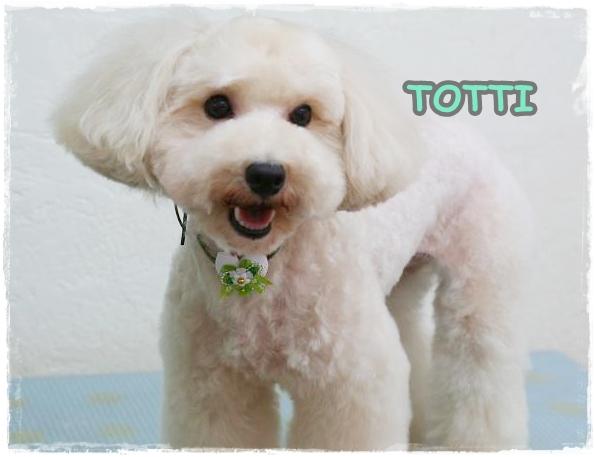 totti3_20110829153131.jpg