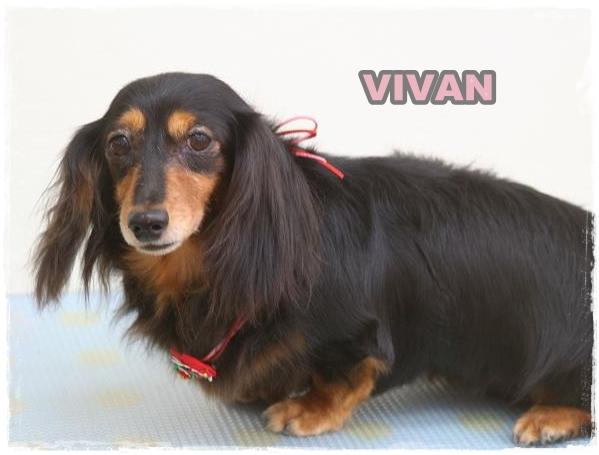 vivian0.jpg