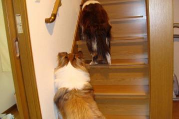 マールとセーラ二階に