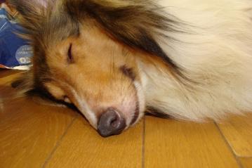マールの寝顔