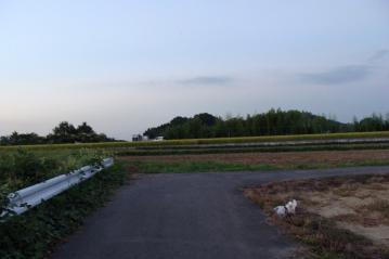 夕方の農道