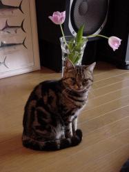 花とミュウ