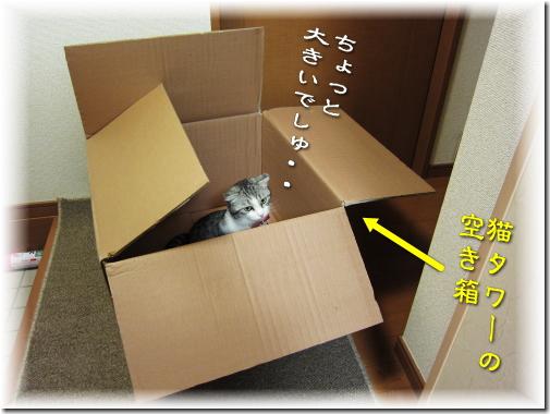 箱が大きすぎるでしゅ