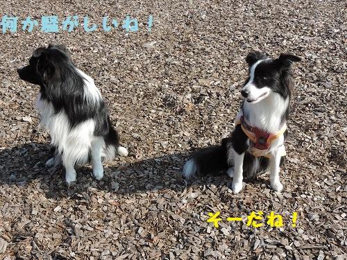 s-DSCN0667.jpg