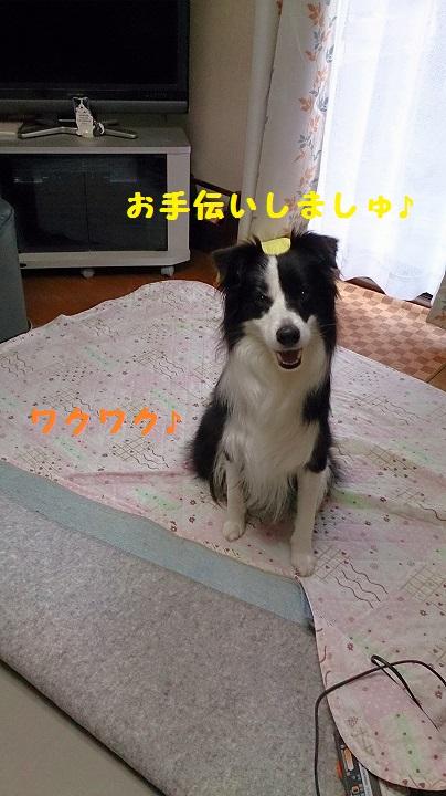 s-IMG_20141116_173600.jpg