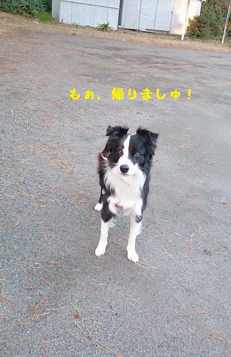 s-IMG_20141213_183009.jpg