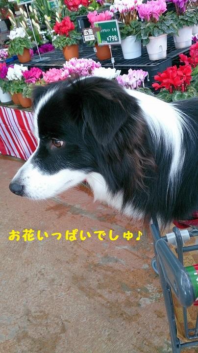 s-IMG_20141221_183200.jpg