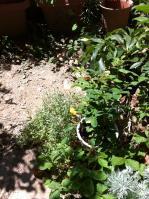 鉢の前に背の低い植物