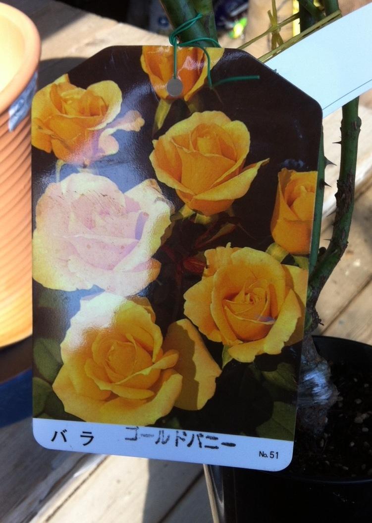 image_20121116105203.jpg