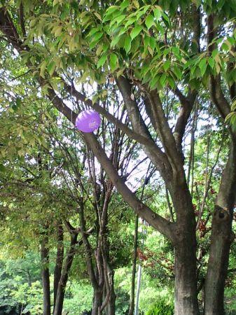 大仙公園風船20110516_450