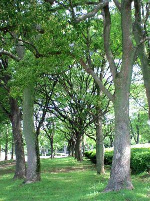 大仙公園20110525_400