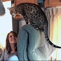 Kristen Stewart with her Bengal Cat