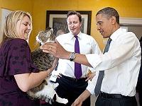 British Prime Minister David Cameron's housecat, Larry