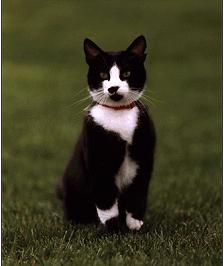 Socks Bill Clintons cat