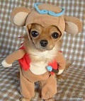 funny dogs in costumes