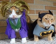 CAT-JOKER-AND-CAT-BATMAN-1319931813.jpg