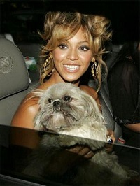 beyonce_dog_munchie_in_car_300x400.jpg