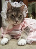 cats-dogs-halloween-costumes-10262011-28.jpg