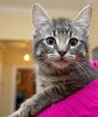 stanley-harper-canada-first-cat-cute-kitten__02.jpg