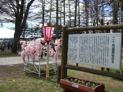 桜まつり看板