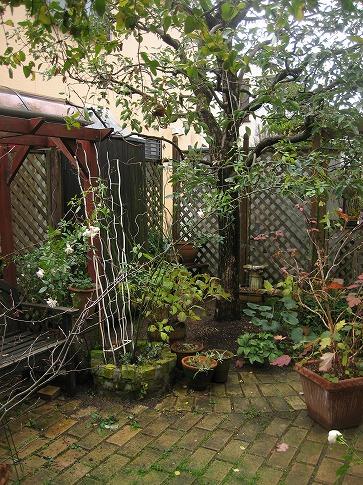 クスノキのある庭のすみっこ