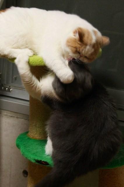 猫の兄弟4