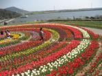 チューリップの大花壇