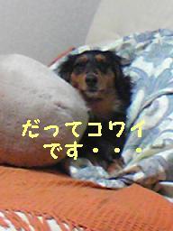 Image1039-1